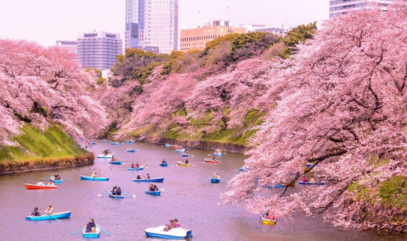 https://www.izbilir.com/uploads/images/2018/07/tokyo-kitanomaru-park-53542921.jpg