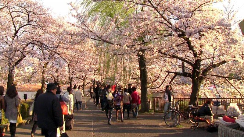 https://www.izbilir.com/uploads/images/2018/07/tokyo-ueno-park-17470651.jpg